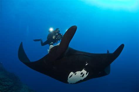 top  places  scuba dive  manta rays
