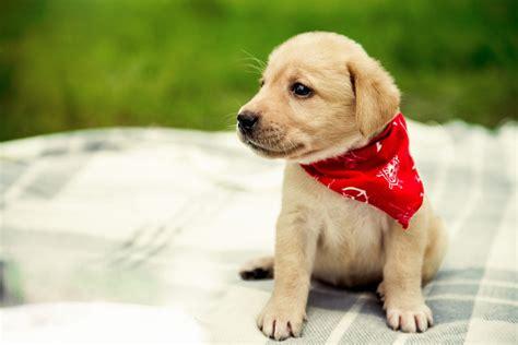 welche versicherung braucht mein hundewelpe tierischehelden