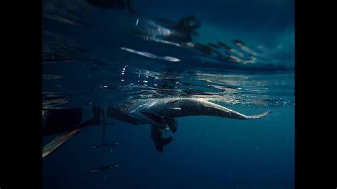 grouper record gag florida state