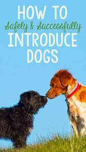 209 best pets images on pinterest With how to introduce a new dog to your dog