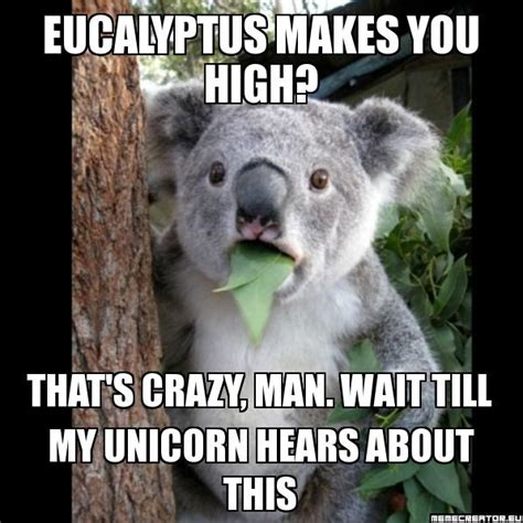 Koala Memes - high koala meme www pixshark com images galleries with a bite