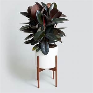 41 best 17 images on Pinterest | Green plants, House ...