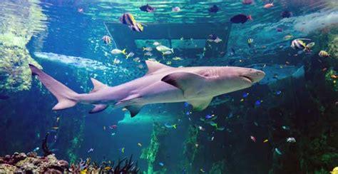 sea sydney aquarium top 5 spots to see australian wildlife in sydney tourist destinations