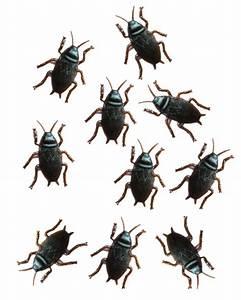 Kakerlaken ähnliche Insekten : kakerlaken 10er packung kunststoff kakerlaken ~ Articles-book.com Haus und Dekorationen