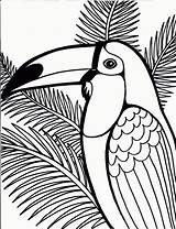 Coloring Pages Bird Toucam Birds Printable Parrot Owl Printables Teenagers sketch template