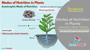 Nutrition In Plants Class 7 Science