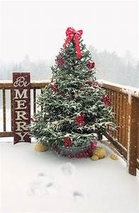 How, To, Decorate, An, Outdoor, Christmas, Tree