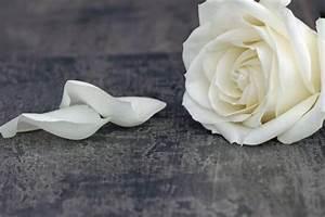 Trauer Blumen Bilder : danksagung trauer danksagungstexte als beispel ~ Frokenaadalensverden.com Haus und Dekorationen