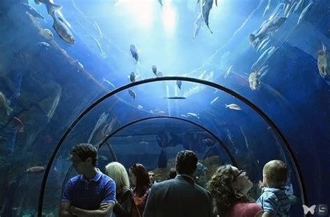 intra science visite de l aquarium du qu 233 bec