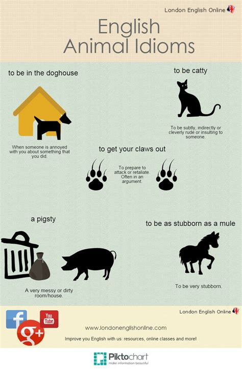 Don't Want To Be In The Dog House? Check Out Our Animal Idioms! Leo )  English Idioms