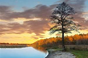 Baum Am Wasser : livingwalls fototapete baum am see 470649 ~ A.2002-acura-tl-radio.info Haus und Dekorationen
