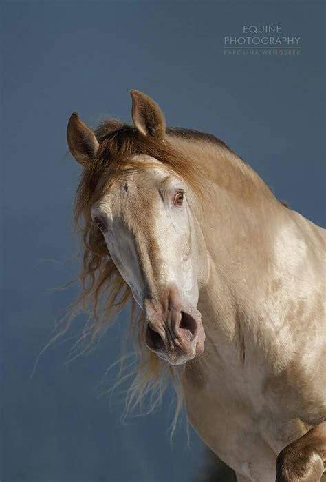 Zeig Mir Dein Bild by Zeig Mir Bilder Pferden Kostenlos Herunterladen
