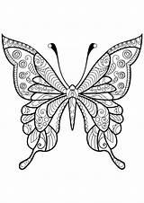 Butterfly Coloring Adult Adults sketch template