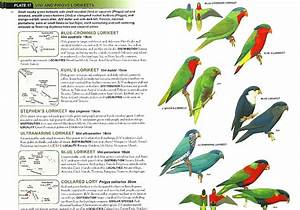 Parrot Identification Chart Christian Artuso Birds Wildlife Parrots Of The World