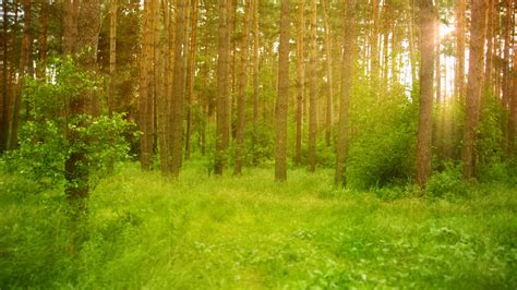 Free photo: forest scene - Alley, Park, Way - Free ...