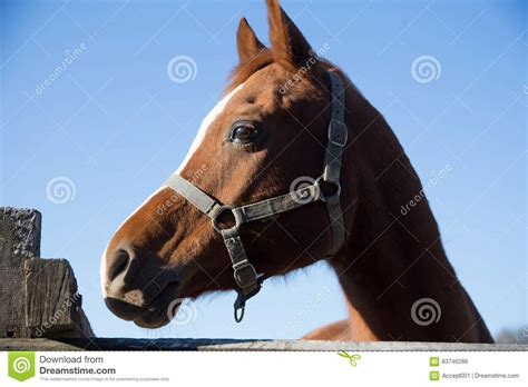 corral fence thoroughbred horse wooden looking preview