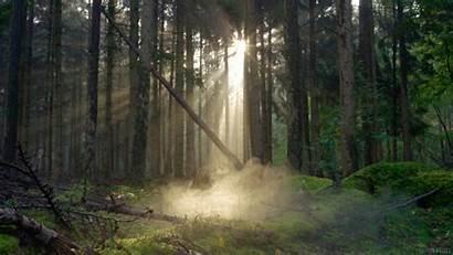 Giphy Nature Cinemagraph Smoke Living Stills Morning