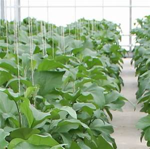 Plant protection product registration - Linge Agroconsultancy