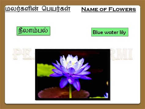 flowers  tamil part  youtube