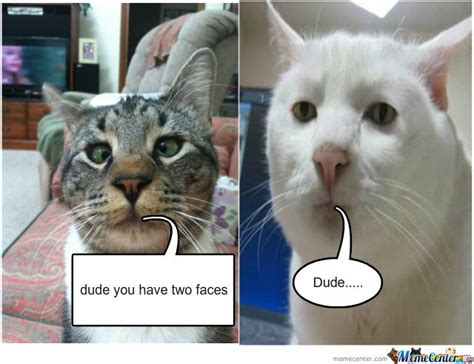 Derp Cat And Stoner Cat By Doogusta  Meme Center