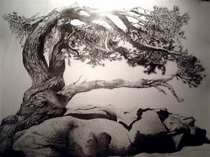 10 beautiful tree drawings for inspiration hative