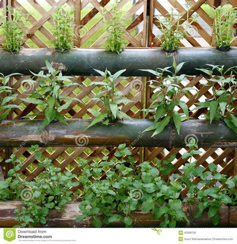 vegetables vertical garden stock photo image 43398792