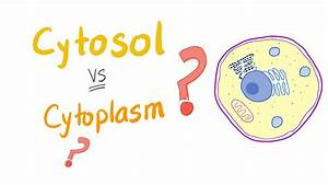 Cytosol Vs Cytoplasm  What U2019s The Difference