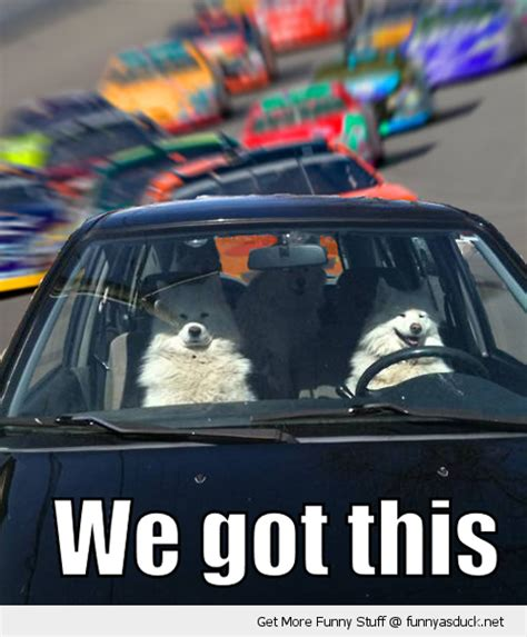 Funny Memes About Driving - dogs in the car meme we got this dogs car animal race driver driving nascar track funny