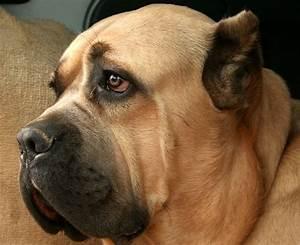 Fotos De Razas De Perros
