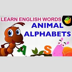 Animal Alphabet  Pre School  Learn English Words (spelling) Video For Kids And Toddlers Youtube