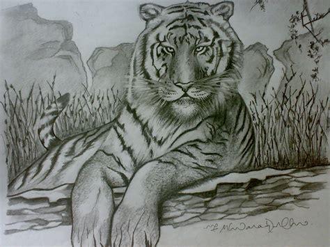 ferrocious feline tiger claw lion animal drawing