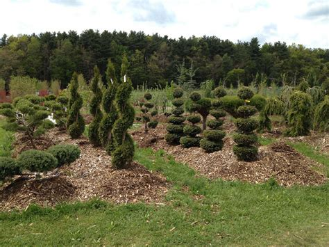 tree nurseries topiaries ornamental evergreens pell family farm