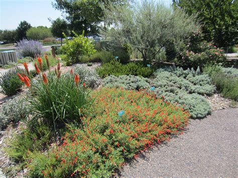 xeriscape plants city of broomfield xeriscape demonstration garden plant select