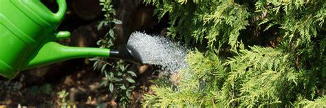 Der Garten Im August by Der Garten Im August Tipps Tricks Vom G 228 Rtner Diybook At