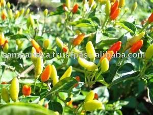 African bird eye chili products,Uganda African bird eye ...