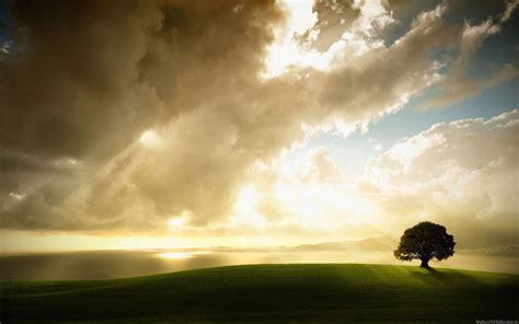magnifique fond 233 cran arbre 10 000 fonds d 233 cran hd gratuits et de qualit 233 wallpapers hd