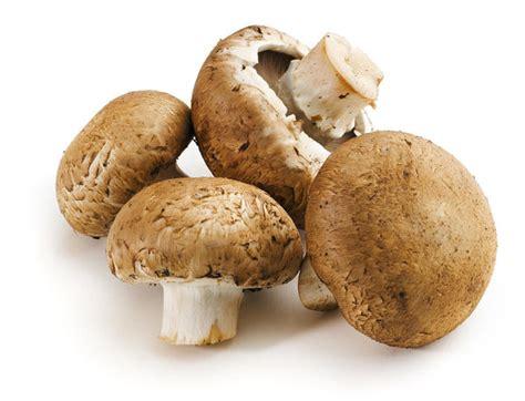 types  mushrooms  india mushroom varieties india