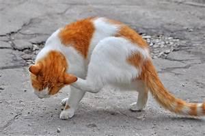 Средство от блох для кошек адвантейдж отзывы