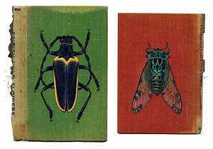 Bugs on book covers culture scribe for Bugs on book covers