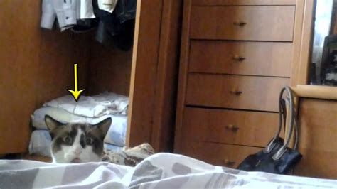 Cat Peeking Over Bed  Funny Russian Dramatic Stalking Cat