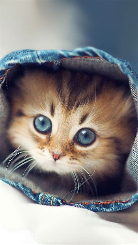 cute kittens wallpapers  iphone  hd kitten wallpaper