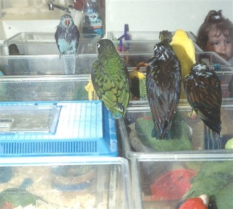 Parrot Bodies Hit The Floor by 100 Bodies Hit The Floor Parrot Parrots Your