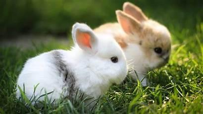 Bunny Pretty Rabbit Wallpapers Animals Walls