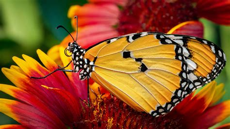 closeup photo  yellow black design butterfly