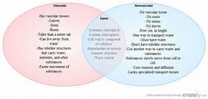 Vascular And Nonvascular Plants   Venn Diagram
