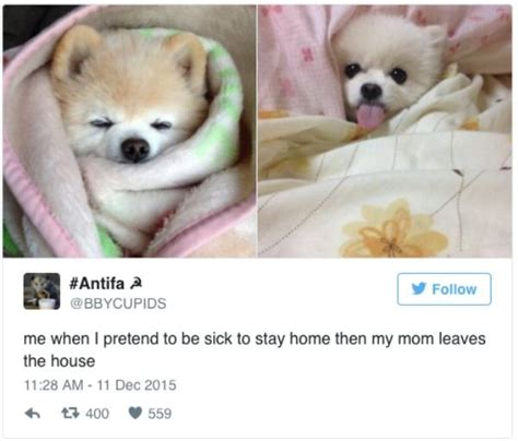 Sick Puppy Meme - funniest memes about being sick 20 photos thechive