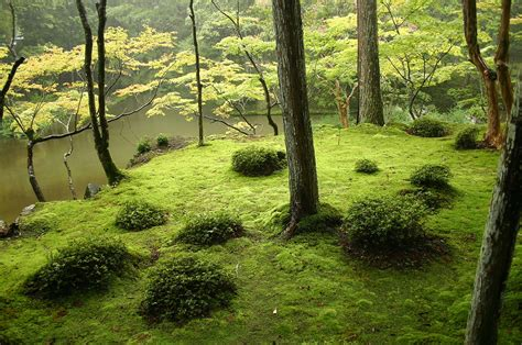 zen backyard garden space moss relaxing create