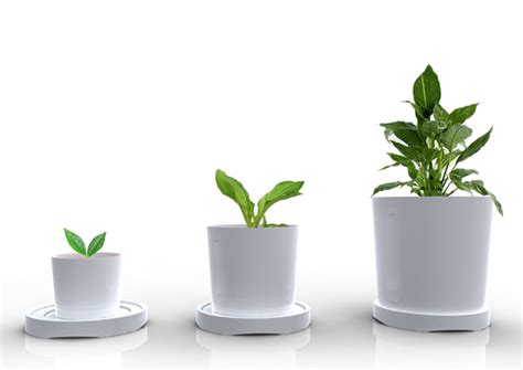 designer plants growing pot yanko design