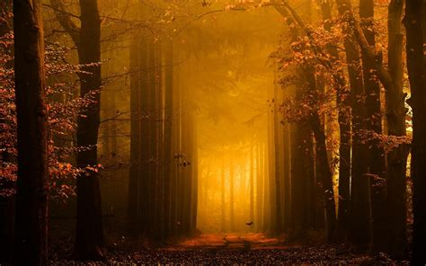 Gold Autumn Wallpapers by Landscape Nature Forest Path Leaves Trees Mist