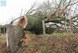 Abattage D Arbres Autorisation : courgenard col re apr s l abattage d arbres centenaires ~ Premium-room.com Idées de Décoration